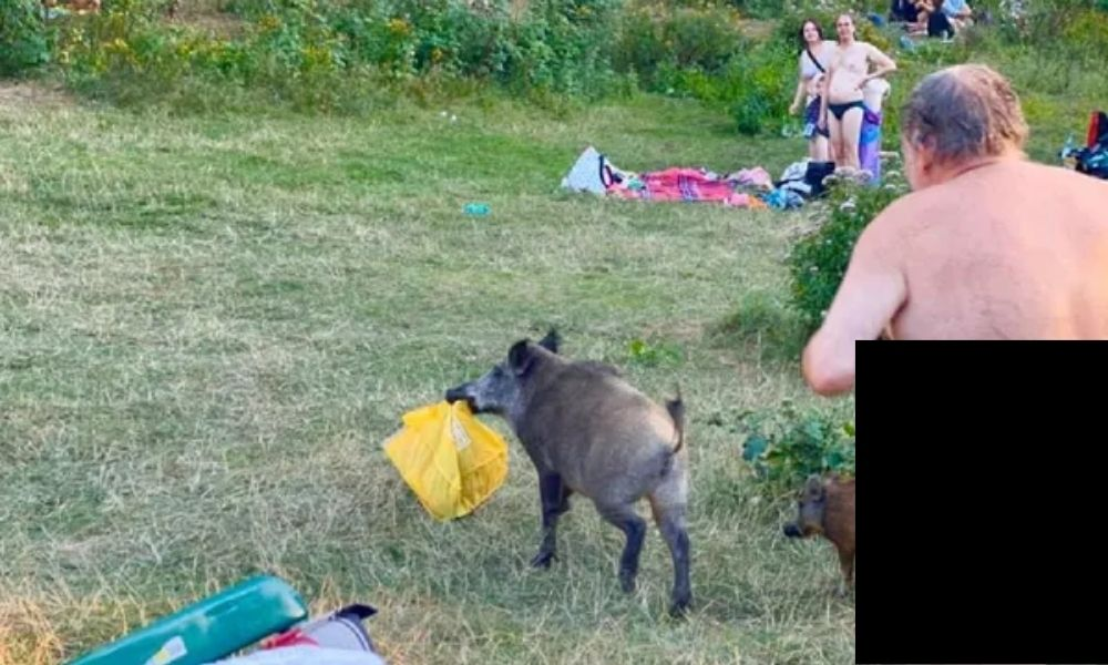 I just like pigs: Naked man found drinking beer in barn